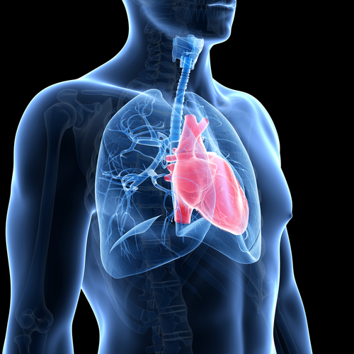Transplanting Non-Traditional Donor Lungs Can Save Patients With End-Stage Lung Disease