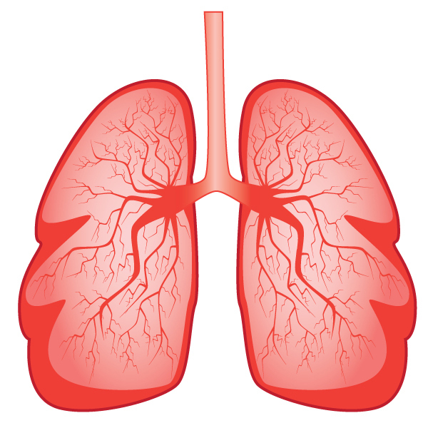 Newly-Discovered Lung Defense Mechanism Against Bacteria Could Benefit CF, COPD, Asthma