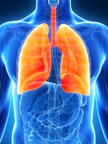 Researchers Discover A New Mechanism to Prevent Pulmonary Edema in Severe Infections