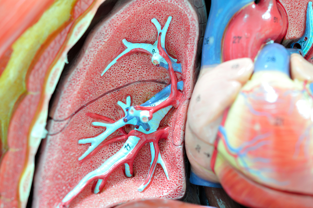 Lung Tissue Can Recover After Injury Better Than Originally Thought, Study Shows
