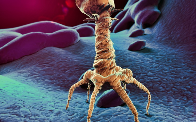 AmpliPhi bacteriophage for CF patients